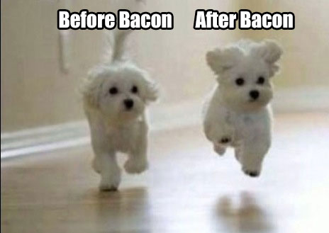 Top 10 Best Bacon Memes 2018